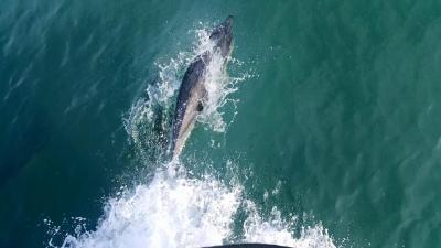 Fasnet tours dolphin